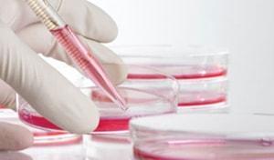 анализы крови для спортсменов