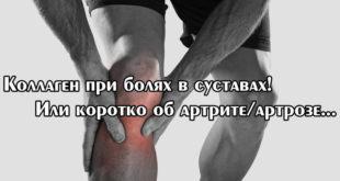 Коллаген – спортпит для суставов